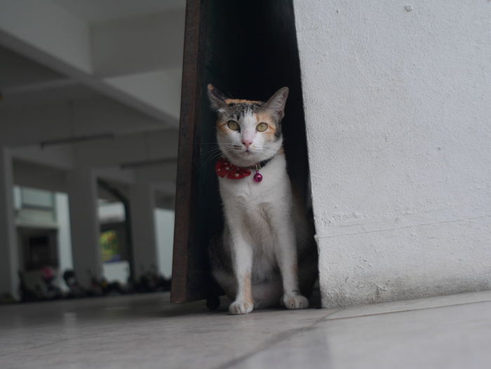 The Street Photographer - 2017 EyeEm Awards Pets Animal One Animal Domestic Animals Domestic Cat Looking At Camera Animal Themes Alertness Dog Portrait No People Protruding Mammal Indoors  Collar Day Pet Portraits