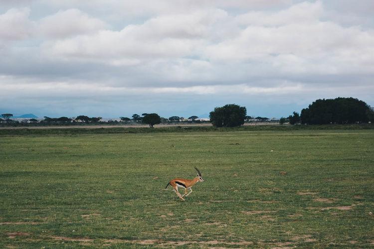 Bird on field against sky