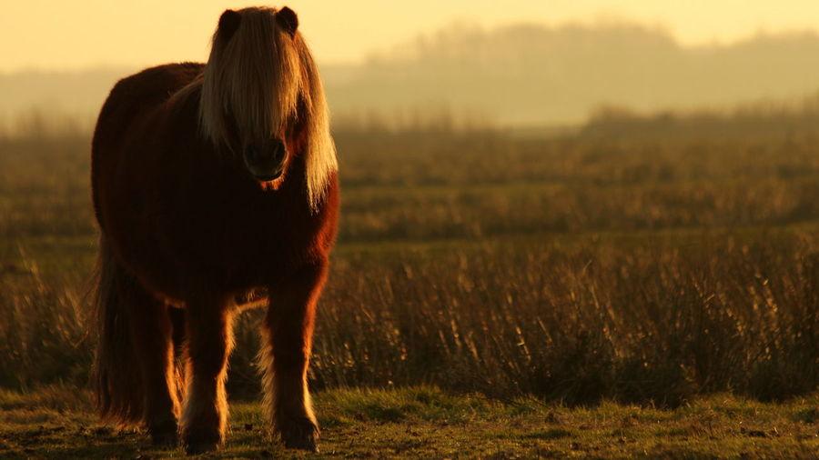 Pony standing on grassy field