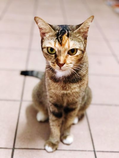 Two-face Street Cat Cat Domestic Cat Domestic Pets Domestic Animals Mammal Animal Themes Feline Animal Looking At Camera First Eyeem Photo