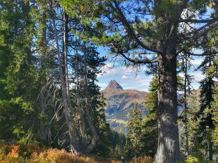 Mountainview View Looking Dream Autumn Herbst Aussicht Traumhaft Outdoors Nature EyeEmNewHere Eyemphotography Likeit Free Loveit Austria No People Hiking Tree Mountain Branch Forest Sky