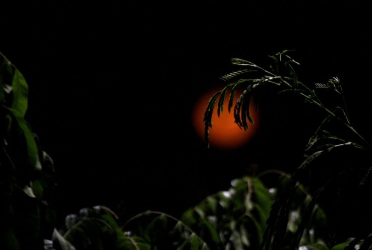 Close-up of orange plant against black background