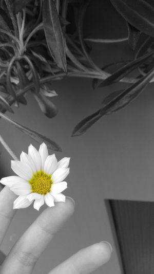 🌼 Flower First Eyeem Photo