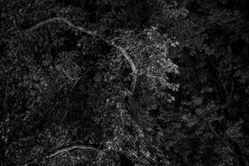 The leaves Abstract Backgrounds Beauty In Nature Black Background Black Color Branches Close-up Dark Full Frame Horizontal Leaves Monochrome Photography Nature Night No People Outdoors Textured