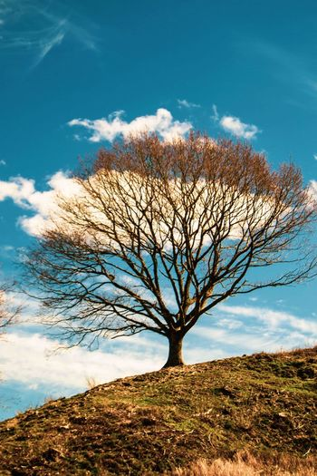 Low angle view of bare tree on field against sky