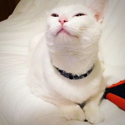Pet Portraits Babygato Pets One Animal Domestic Animals Whisker Close-up Feline Animal Themes