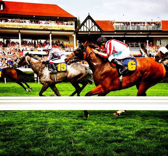 Chester Races Chester Ladies Day Horse Horses Horseriding Jockey Racing Betting