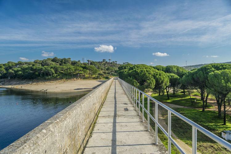Tree Bridge -