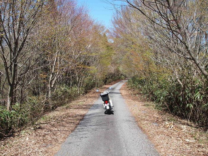 Japan Miyazaki Forest Honda Super Cub Land Vehicle Nature Outdoors Ride Riding Road The Way Forward Transportation Tree