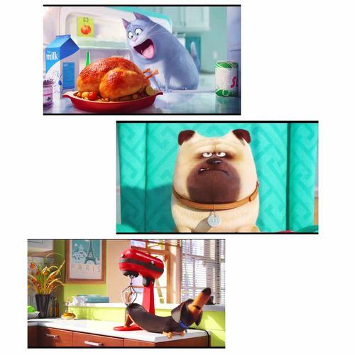 好像要等明年上映🎬想看可愛的毛小孩兒們😌💕寵物當家 MOVIE Comingsoon Except Cute♡