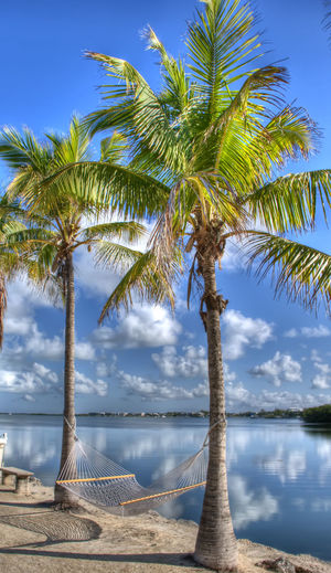 Just a relaxing place! Beauty In Nature Blue Cloud - Sky Coconut Palm Tree Day Green Color Growth Hammock Nature No People Outdoors Palm Tree Palm Tree Scenics Sea Sky Sky And Clouds Summer Tourism Tranquil Scene Tranquility Tree Trunk Tropical Tree Vacations Water