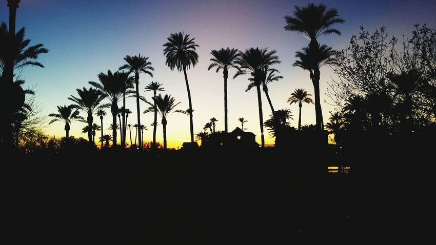 Sunset Silhouette Palm Trees Painted Sky Colors Black Enjoying Life Oasis In The Desert Phoenix, AZ Glendale Park Historical Park EyeEm Best Shots - Trees EyeEm Best Shots - Nature EyeEm Best Shots - Sunsets + Sunrise Beautiful