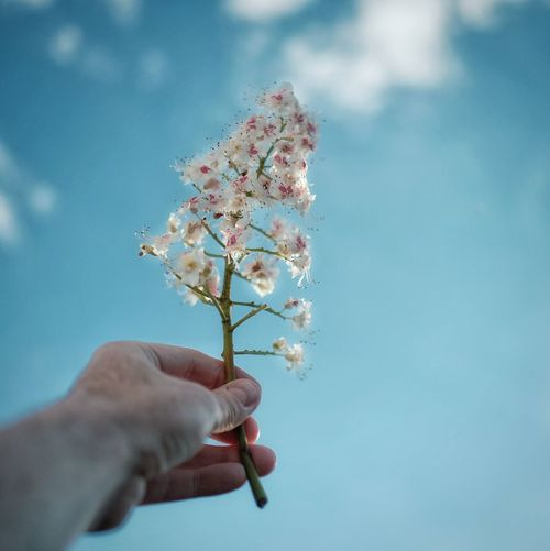 Cropped hand holding flowers against blue sky