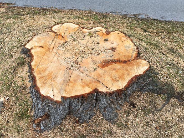 Warum wurde dieser Baum gefällt? Tree, Baumstumpf, Sägespäne, sägen, Baum fällen, Sawing Woodcut Wood Tree High Angle View Day Sand Nature Beach No People Textured