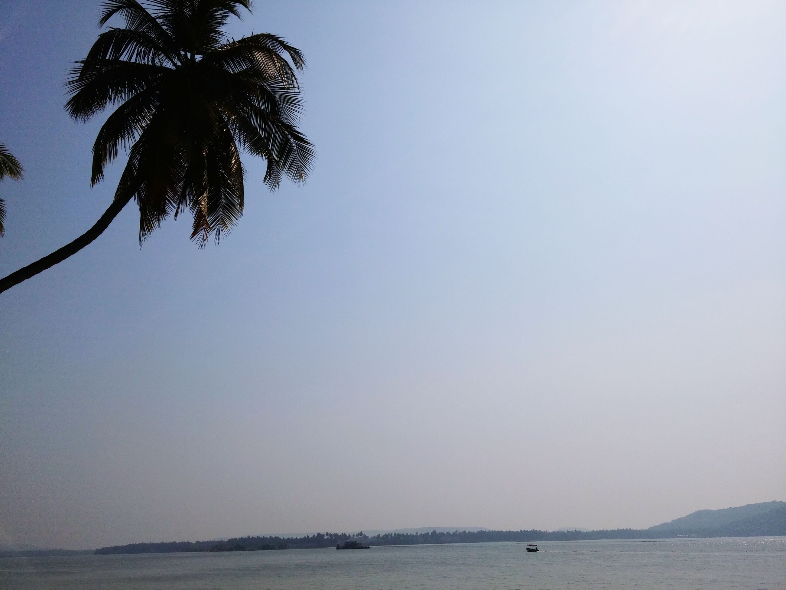 water, clear sky, tranquility, tranquil scene, sea, tree, scenics, beauty in nature, nature, palm tree, sky, copy space, horizon over water, beach, growth, idyllic, waterfront, no people, outdoors, silhouette