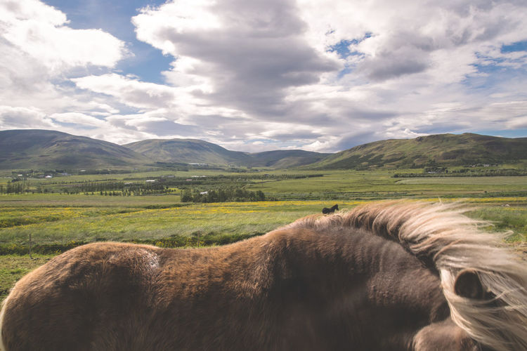 Animal Brown Horse Close Up Clouds And Sky Eyes Hair Horse Horse Hair Horse Photography  Horse Portrait Horse Running