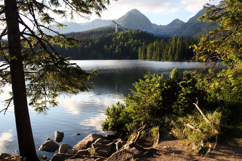 Afternoon Light Hiking Spruce Tree Strbske Pleso Szczyrbskie Jezioro Tatra Mountains The Week On EyeEm Beauty In Nature Hiking Trail Lake Landscape Mountain Mountain Lake Mountain Range Nature No People Scenics Ski Jump Ski Jumping Hill Spruce Tranquil Scene Tranquility Travel Destinations Tree Water