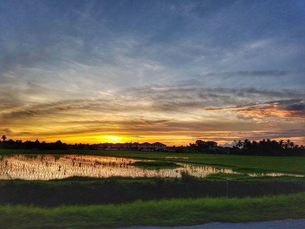 Sunset over paddy field in Kedah, Malaysia. Tree Rice Paddy Water Sunset Rural Scene Agriculture Field Sky Landscape Grass