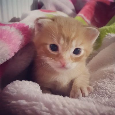 Earlier today... Cats Cat Catlover Ilovemycat Photooftheday Picoftheday Cute Bestoftheday Igers Catoftheday Home Sweet Kitten Kittens Adorable