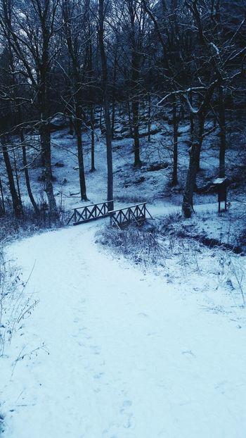 Walking Around Winter Morning