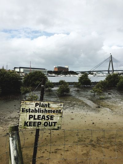 Mangroves Environment Conservation ANZAC Bridge Sydney Harbour