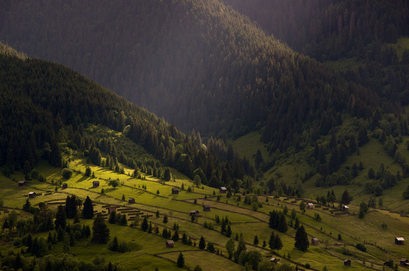 High angle view of trees on field against mountains