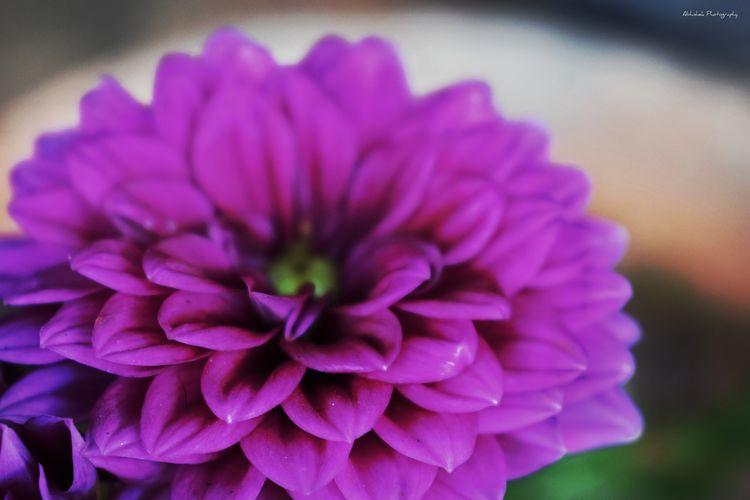 Flower 🌼💟