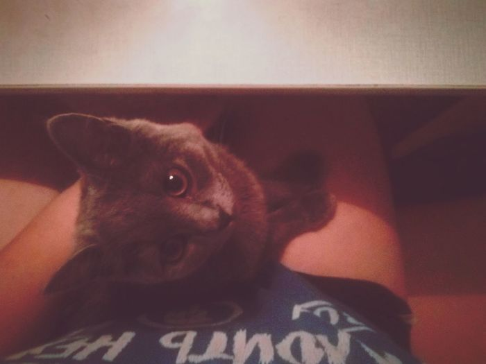 Katze Love♥ CATWANG Cat♡