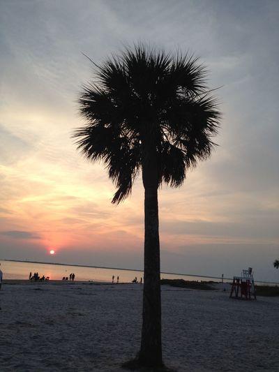 Palm Trees Beach Sunset