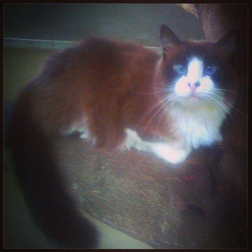Nega sapetex .. Haha 😻 Subiunaárvore Nãoqueriamaisdescer Cats Catlovers neguinha nature love