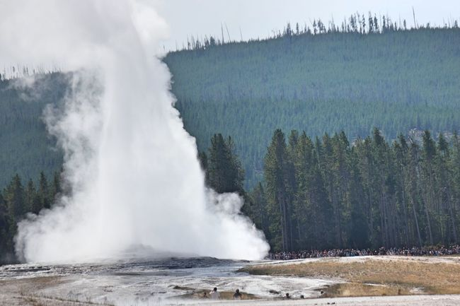 Yellowstone Beauty In Nature Geyser Nature Old Faithful Power In Nature Predictable Reliability Tourism