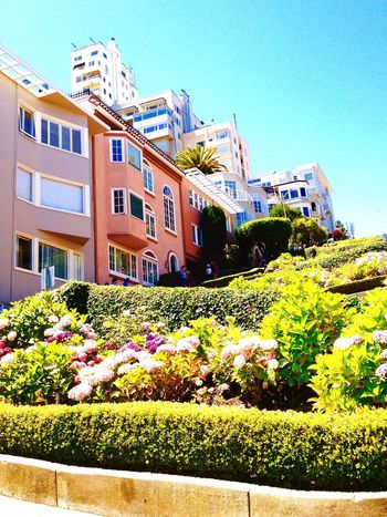 The homes on Lombard Street in San Francisco, the curviest street in the world. Tourism Travel Tourist Attraction  Vacations California San Francisco View Vacation Hill Road Street Curves