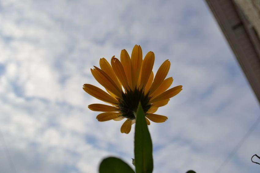 Nature Flower MyBackGarden