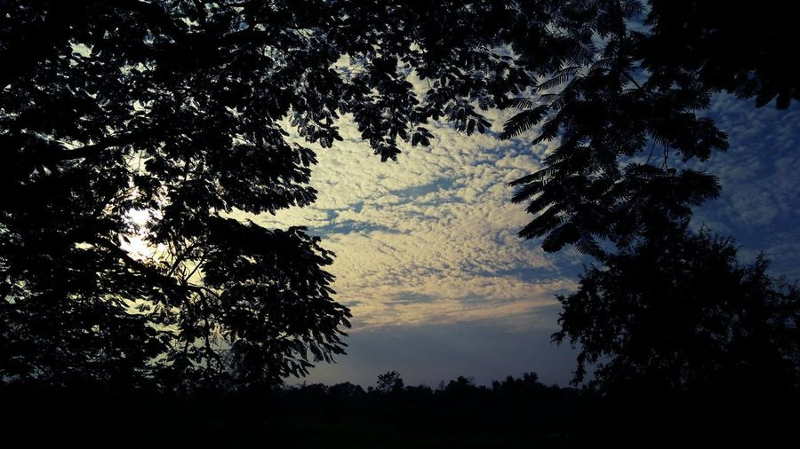 A Beautiful sunset clicked by Mobile..... Tree Silhouette Low Angle View Nature Sky No People Outdoors Beauty In Nature Growth Day mibile photographNature y Sunset Mobile Photography