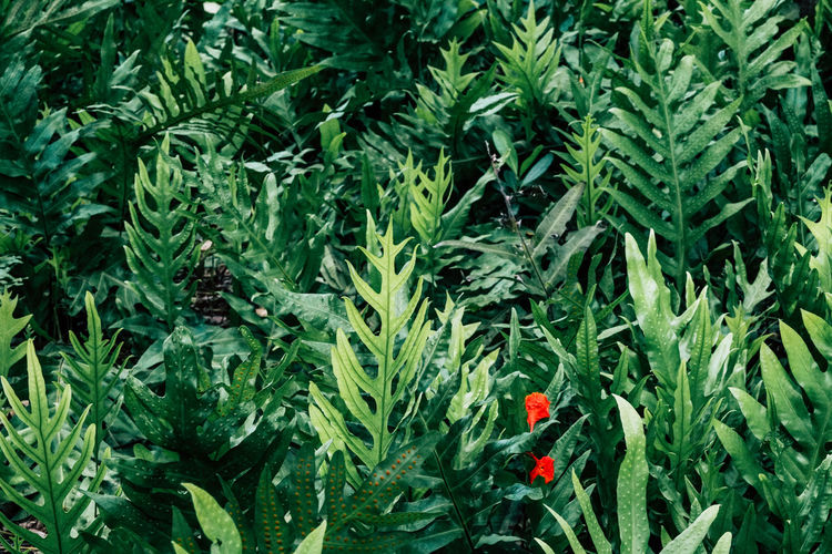 Plant Growth Green Color Plant Part Leaf Flower Beauty In Nature Flowering Plant Freshness Nature Red Food And Drink Vulnerability  Fragility No People Food Day Close-up Land Outdoors Herb