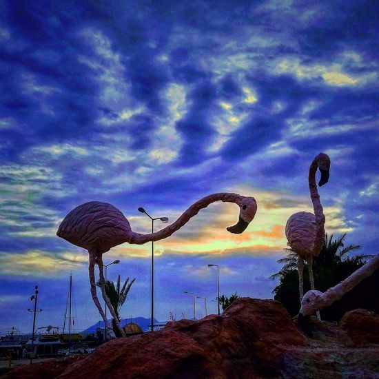 Taşucu Mersin Sky Cloud - Sky Lightning Dramatic Sky Silhouette Flamingo Power In Nature Saguaro Cactus Romantic Sky Atmospheric Mood Storm Sky Only Freshwater Bird Moody Sky Tucson Hurricane - Storm Meteorology