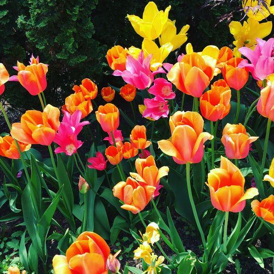 Flowers Botanical Gardens Tower Hill Botanical Garden