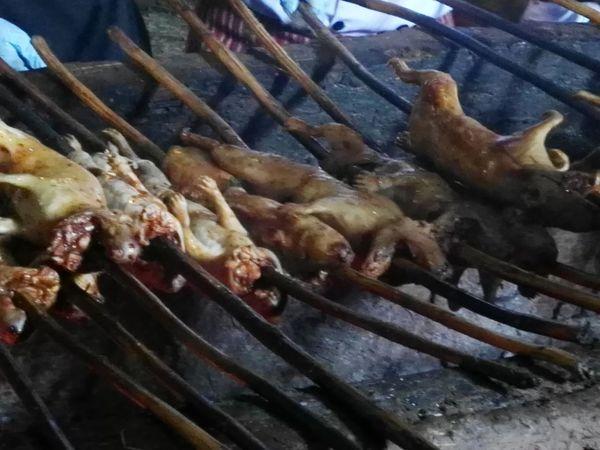 Cuy cobayo conejillode indias cuyalpalo Food Barbecue