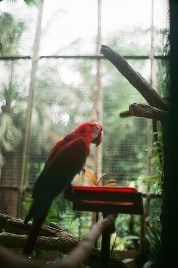 View of bird perching on feeder