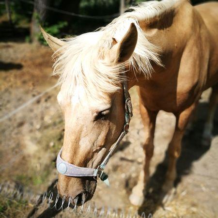 EyeEm Selects Rural Scene Horse Brown Ranch Tree Mane Grazing Close-up Livestock