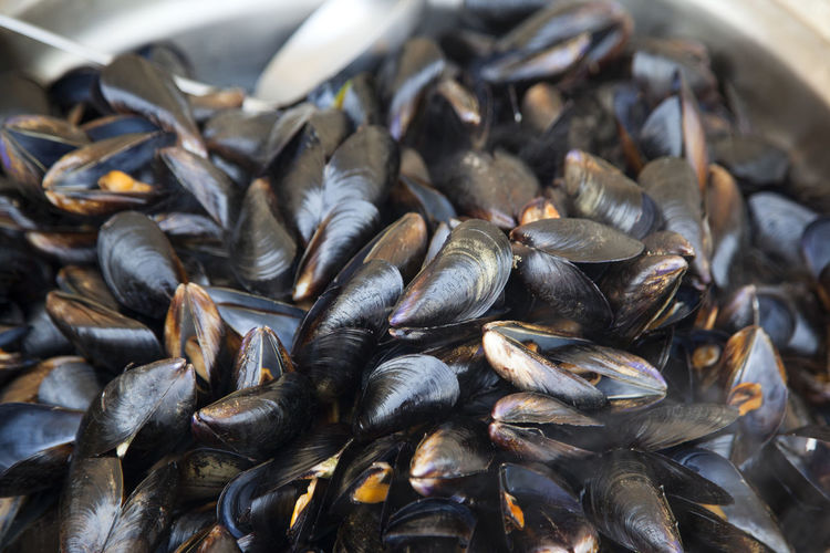Close-Up Of Mussels In Container