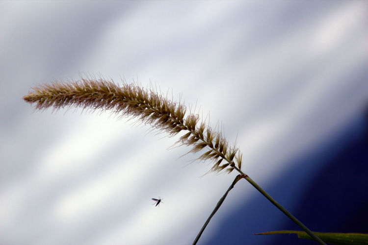 Beauty In Nature Blue Skys Day Insect In Nature Low Angle View Nature No People Outdoors Seeds Flower Sky