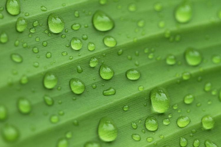rain droplets Leaf Still Life Macro Photography RainDrop Textured  Drop Wet Complexity Rain Droplet Water Drop