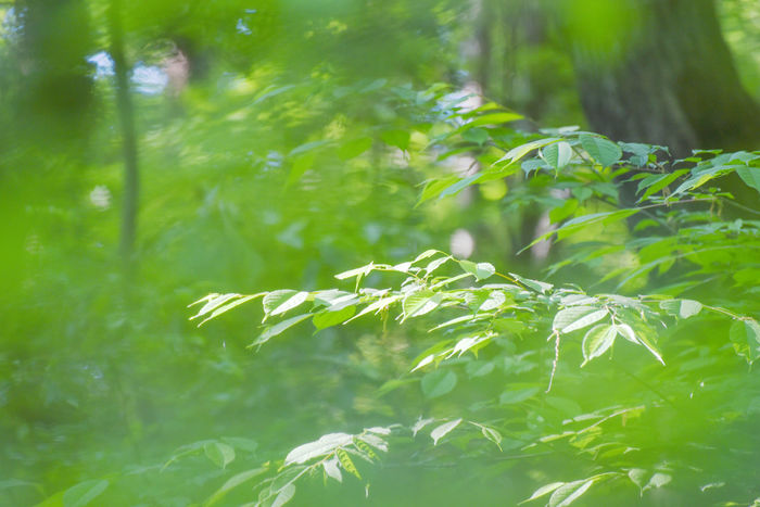 Bokeh Bokeh Photography EyeEm Gallery Fluffy Getting Inspired Green Komorebi Leaves Nature Spring Sunshine Sunlight Sunshine Sunshine And Shadows Taking Pictures