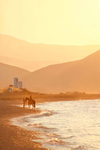 Silhouette horse standing on mountain against sky during sunset