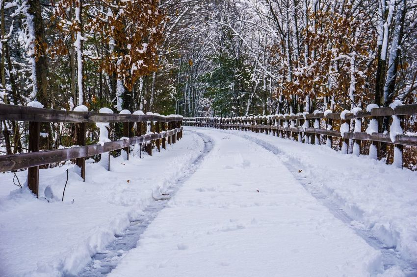 Snow On The Road Snow Winter Cold Temperature Tree Nature White Color Tranquility