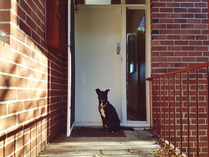 Dog EyeEm Selects Doormat Residential Structure At Home