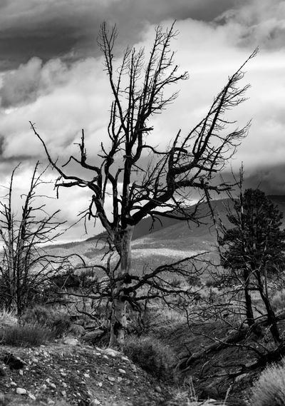 B&w Black And White Burnt Burnt Trees Burnt Wood Cloudy Sky Fire Damage Landscape Mountains Mountains And Sky Mountains And Sky. Mountains And Valleys No People Outdoors Scenic Landscapes Storm Clouds Stormy Weather Tree Burn Vertical