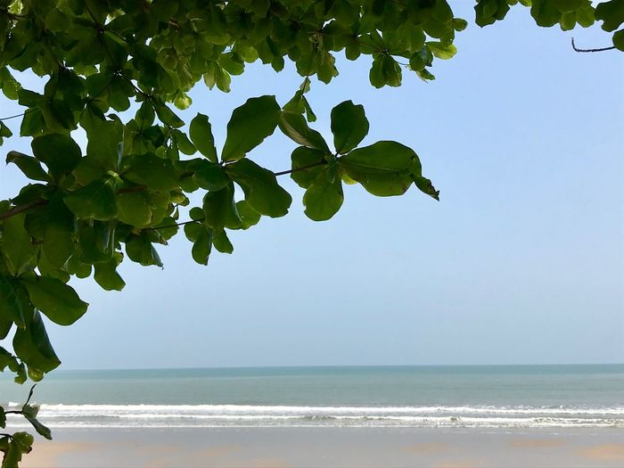Under the tree Nature Sea Beach Beauty In Nature Tree Leaf Outdoors Growth Sky Water Green Color No People Tranquil Scene Clear Sky Horizon Over Water Day Tranquility Scenics Summer Blue