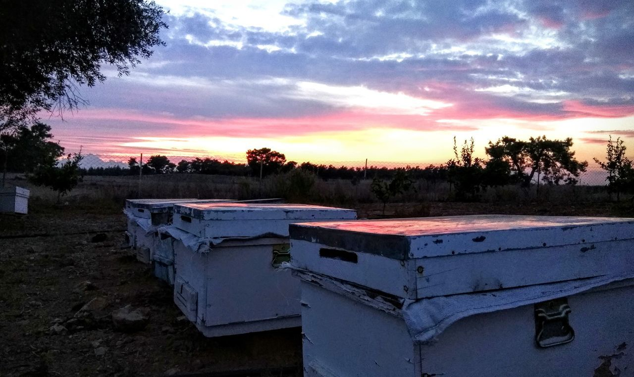 sunset, beehive, sky, apiculture, cloud - sky, outdoors, field, nature, tree, landscape, no people, bee, beauty in nature, day, animal themes
